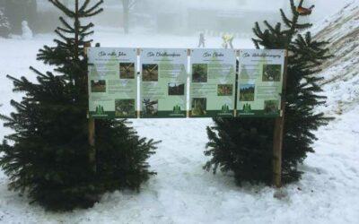 Weihnachtsbaumschlagen für Kinder ein voller Erfolg